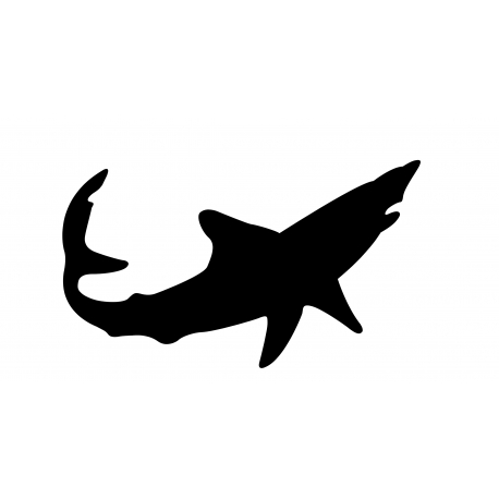 Mako requin