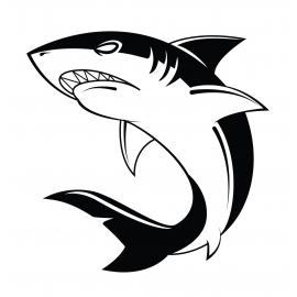 Requin 3