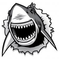 Requin 4